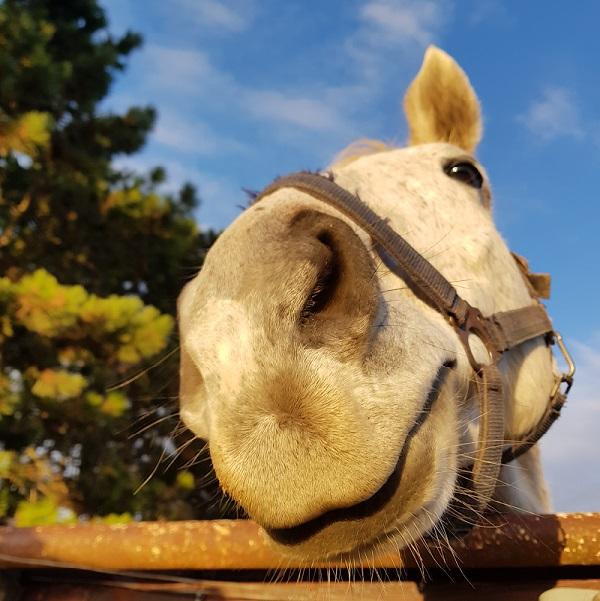 Pferd_red_600x600.jpg